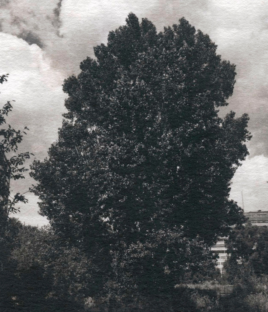 Wind in the trees. Section of a Kallitype hand-printed photograph.